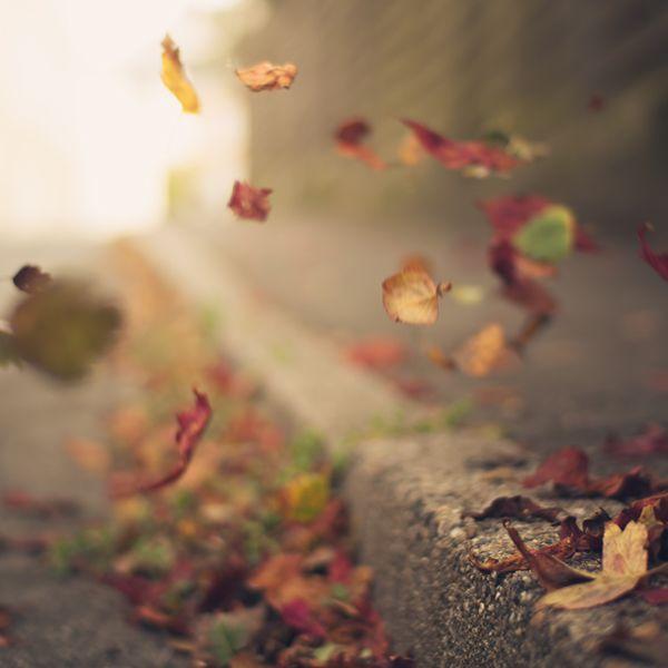 De herfst loopt officieel van 21 september t/m 20 december, maar het astronomisch bepaalde begin van de herfst is de herfstnachtevening (rond 23 september) Beeld: Felix Meyer Please follow and like us: