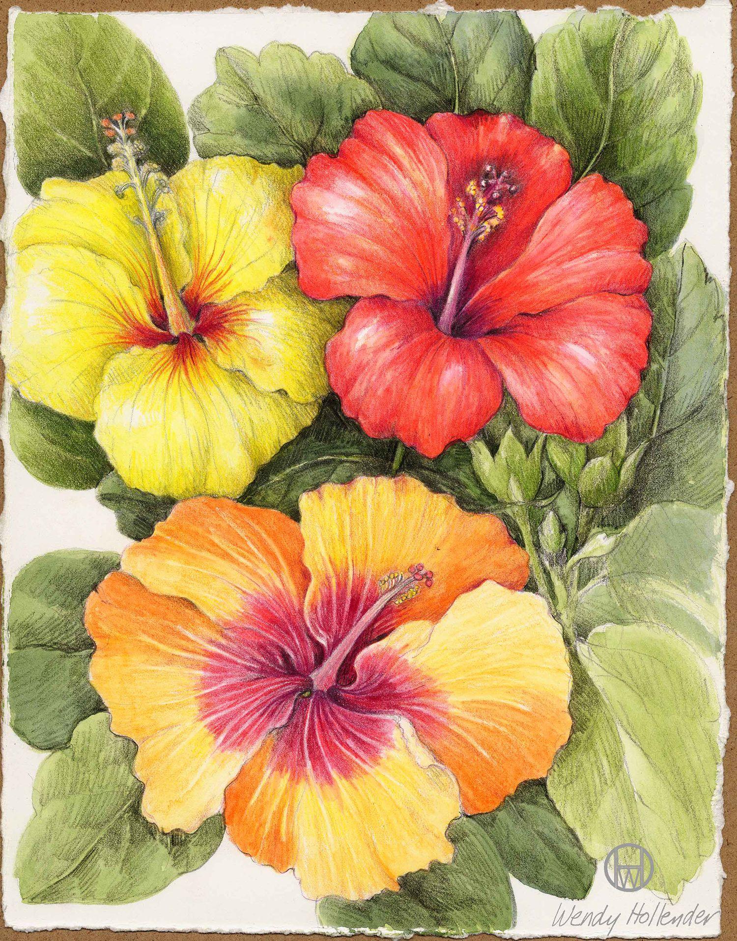 Hibiscus flower drawing pinterest hibiscus flowers and hibiscus izmirmasajfo