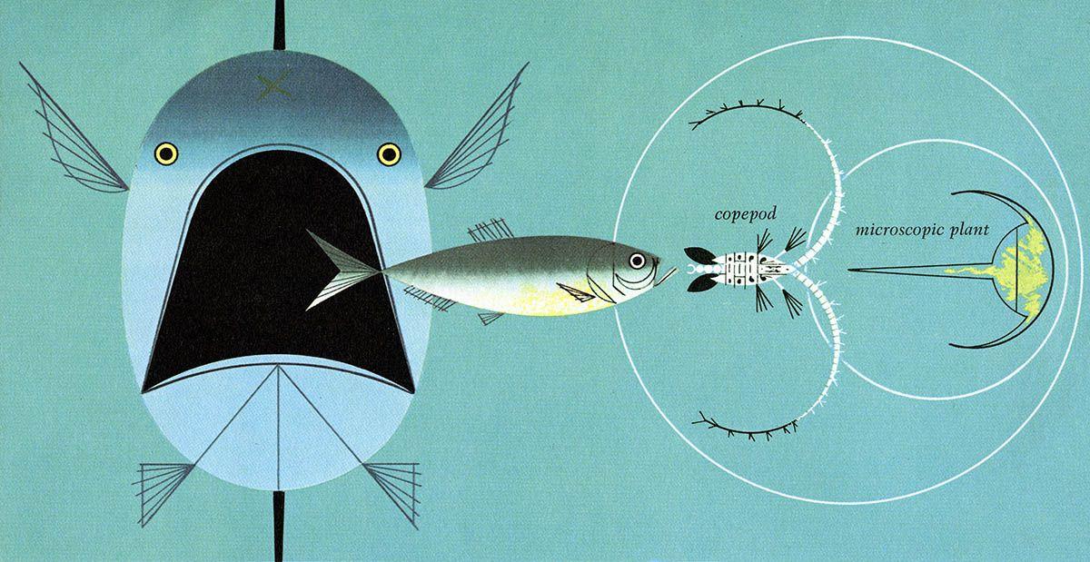 Illustration, bio foodchain via FFFFound