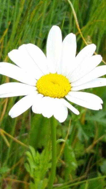 ♡flowers!!