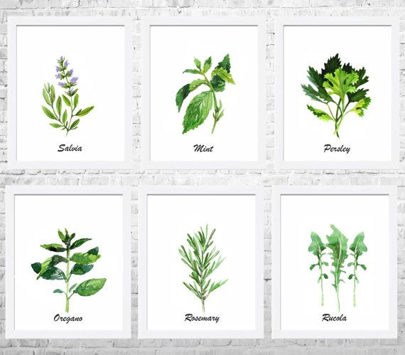 Herbs Watercolor Painting Kitchen Wall Art Set Of 6 Prints