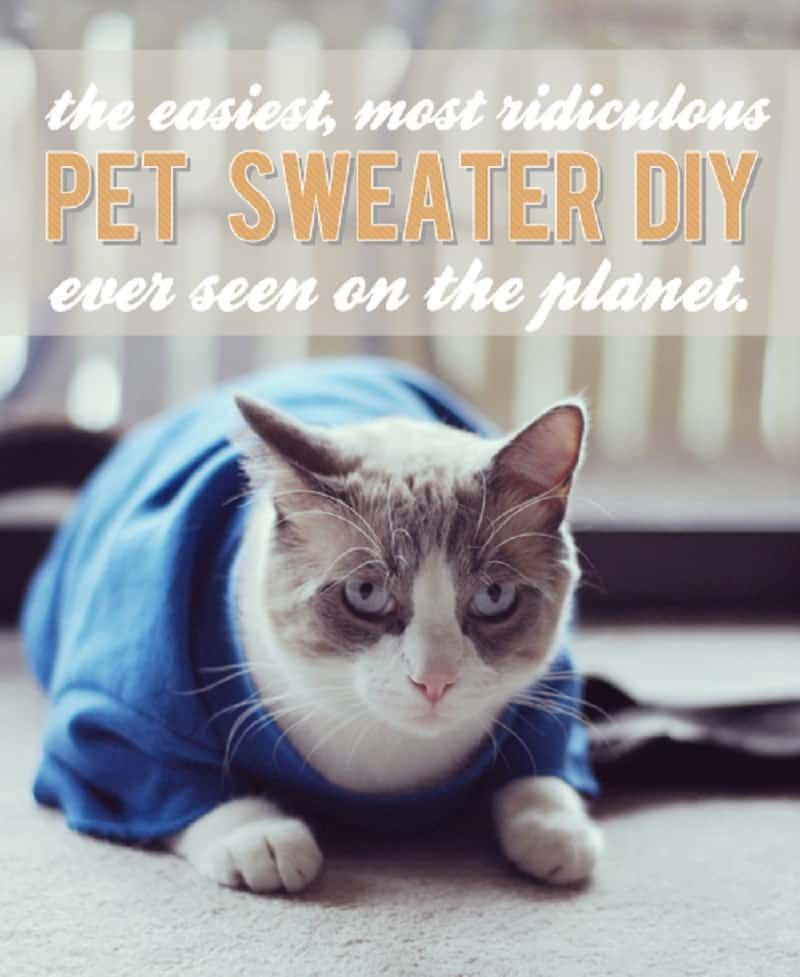 Diy Cat Sweater : sweater, Adorable, Outfits:, Clothing, Furry, Friend, Clothes,, Sweater,, Sweaters