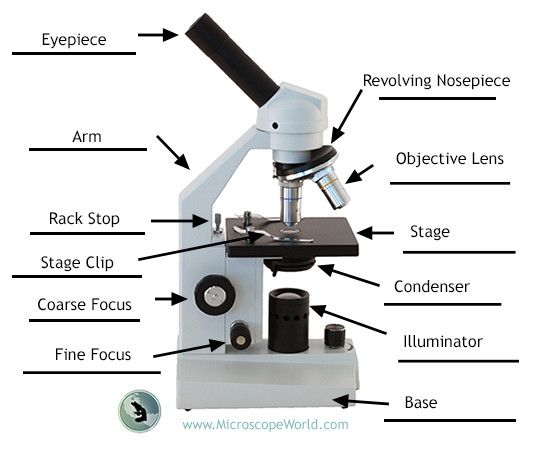 labeling the parts of the microscope blank diagram available for download http blog. Black Bedroom Furniture Sets. Home Design Ideas