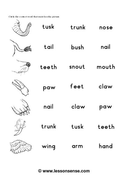 Worksheets Animals Body Parts For Kids Teachers | Roman numerals ...