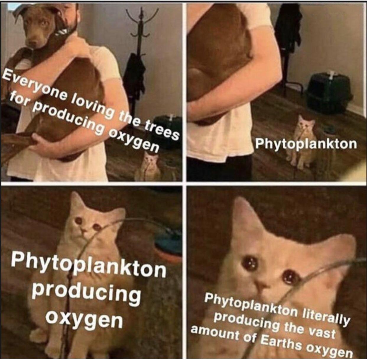 No Love For Phytoplankton Really Funny Funny Memes Tumblr Funny