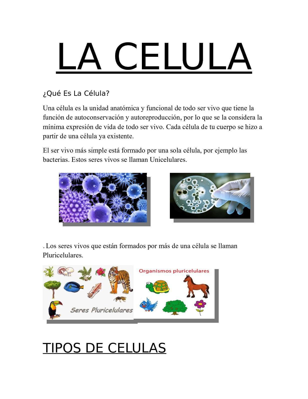 La Celula (Kevin Santiago Barrera Marroquin) | ccnn 5-6º | Pinterest ...