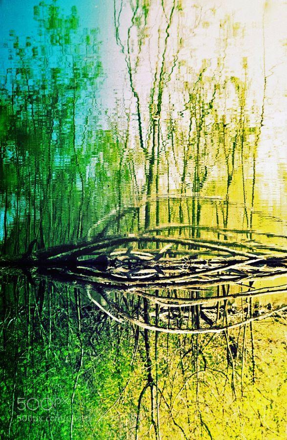 Nuance folle dans cette nature chromatique verte by verslerefletdelexistenceartistique