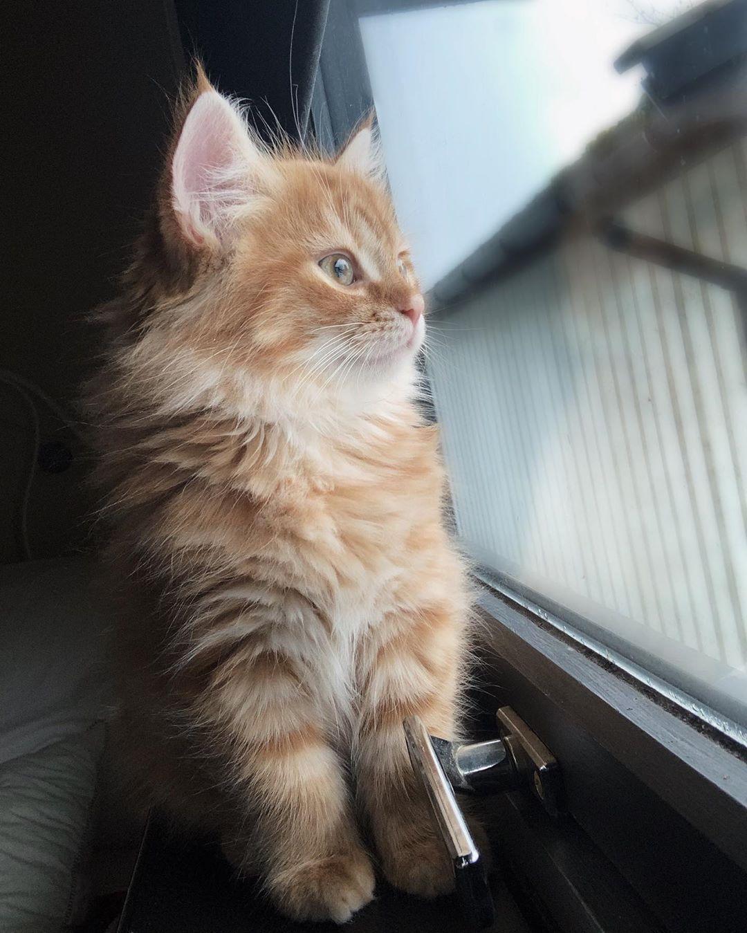 Instagram Bridge Looking Forward To New Adventures Simba Cat Fluffy Lion Catlovers Catlife Crazycatlady Catsofinstagram Adve Cats Cat Day Cat Lovers