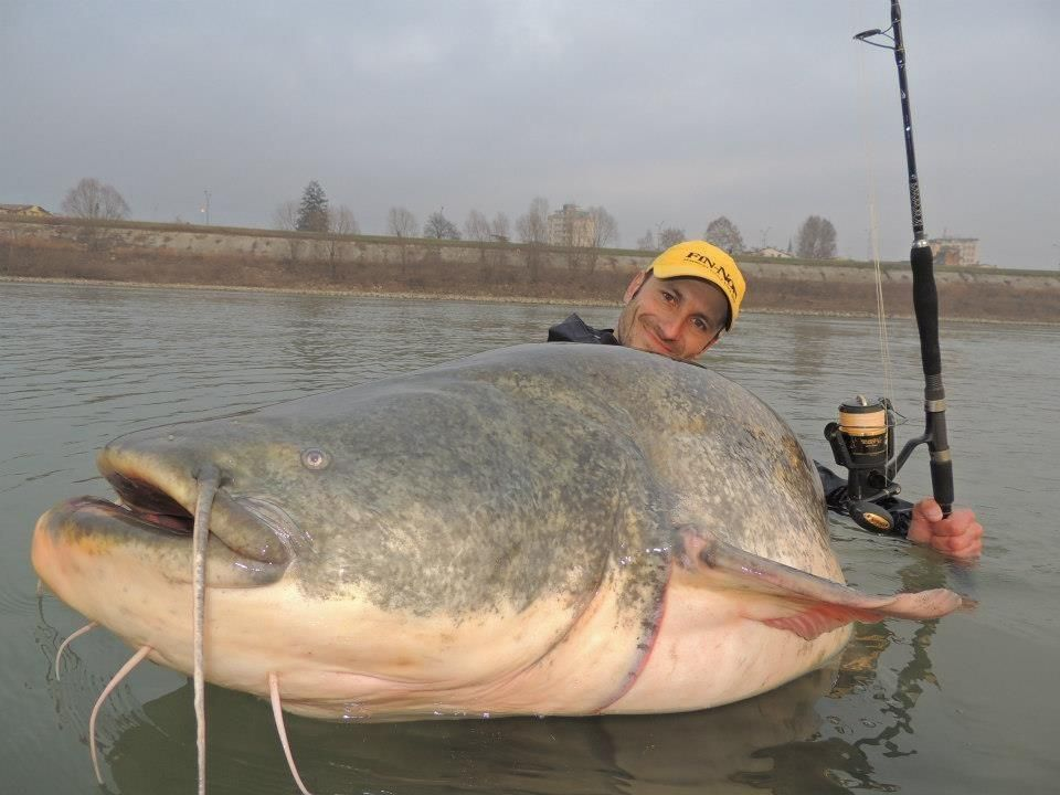 Photo of Catfish!!!!