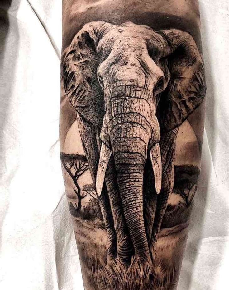 Elephant Tattoos    Jason Barton  barton Elephant jason tattoos is part of Elephant tattoo design -