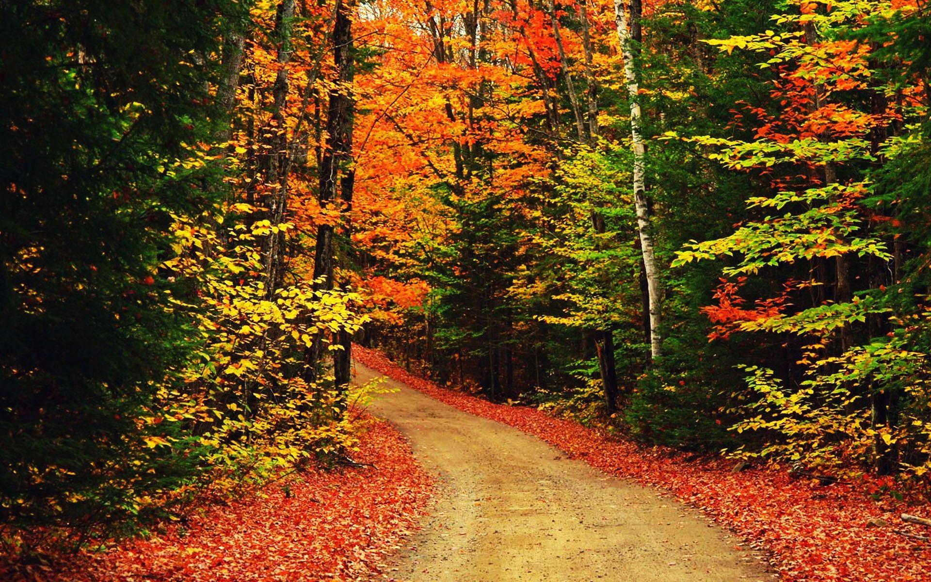 nature scenes Google Search Autumn scenery, Desktop
