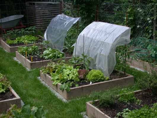 Potager en carre potager ideas pinterest jardins et for Amenagement jardin carre
