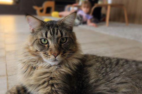 cat - http://www.1pic4u.com/blog/2014/09/04/cat-7/