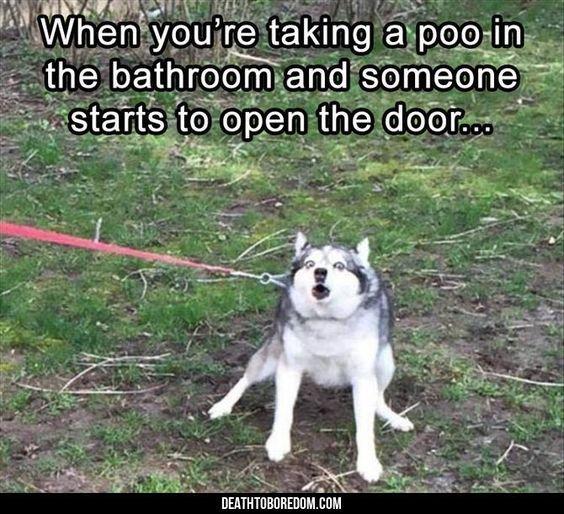 Dog Memes Of The Day 30 Pics – Ep29 #dogs #dogmemes #memes#lovelyanimalsworld - Lovely Animals World #hilariousanimals