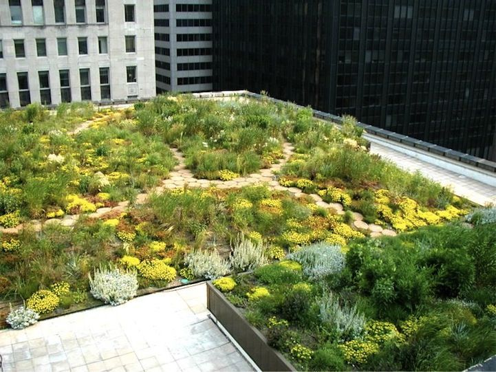 Chicago S City Hall Has Rooftop Garden With 20 000 Plants Garden Design Rooftop Chicago Garden Landscape Design