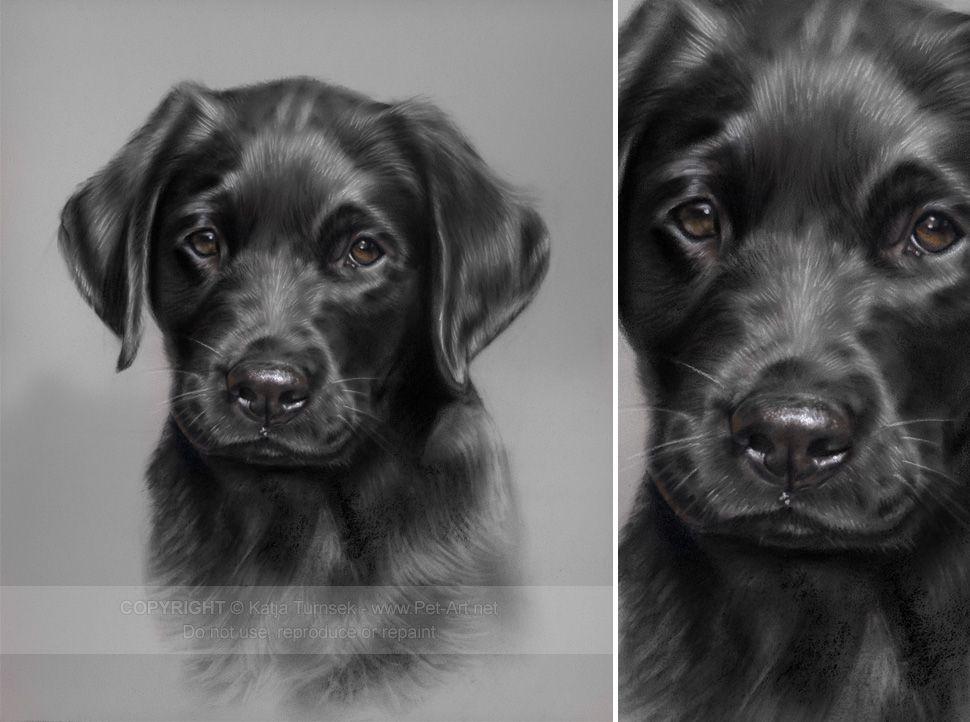 Dog Portrait in Conte Pastel of Black Labrador Jenson