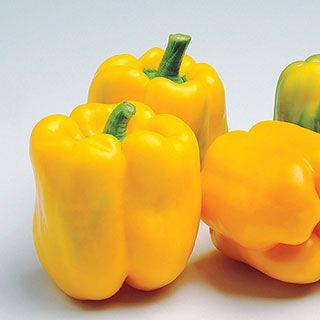 Admiral Hybrid Pepper Seeds Stuffed Peppers Stuffed 640 x 480
