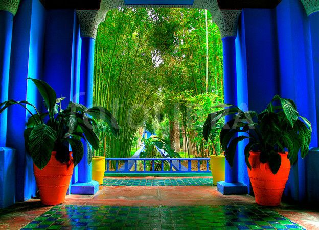 Yves st laurent garden marrakech moroc garden for Jardin ysl marrakech