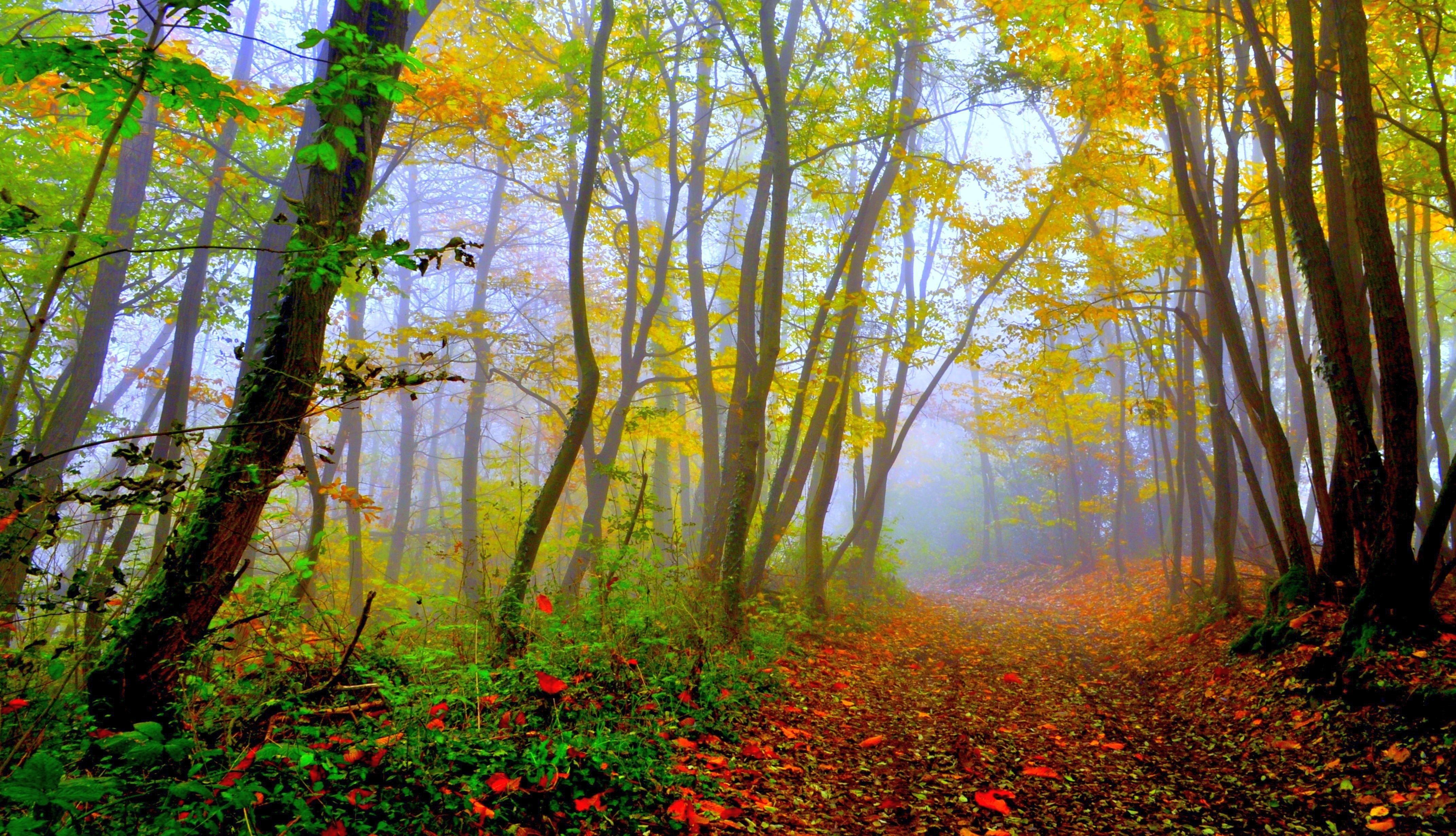 Resultado de imagem para forest beautiful Nature