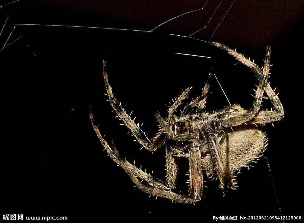 Spider repulses me!!!!!