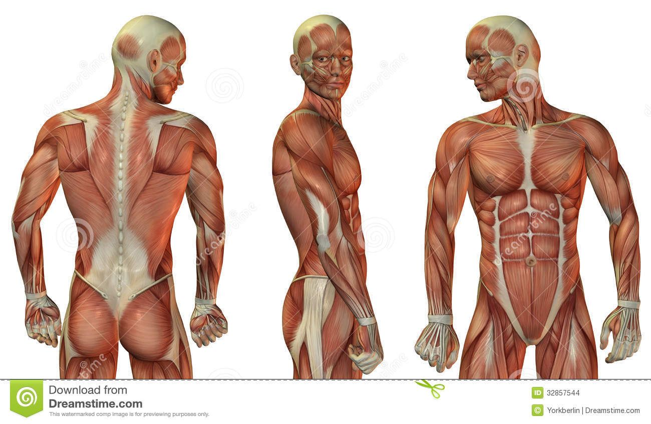 image result for male upper torso muscles | the suit | pinterest, Muscles
