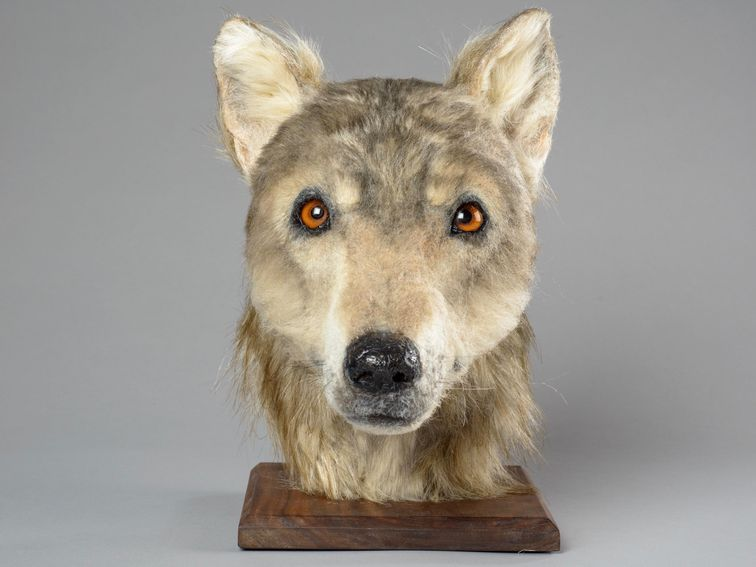 This 4,500yearold reconstructed dog looks like a Game of