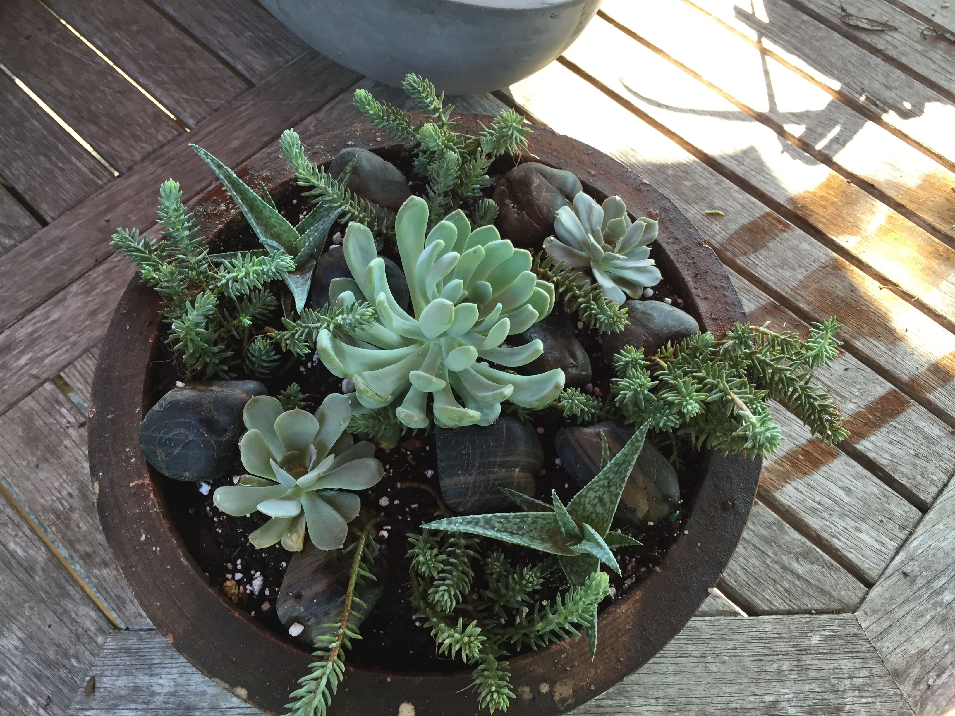 Find This Pin And More On Succulent Gardens10 By Lee2014Ny