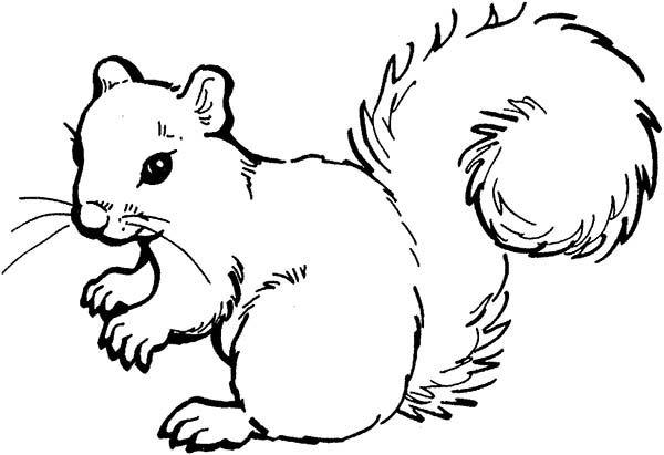 pin von erzsébet szilágyi auf drawings  eichhörnchen