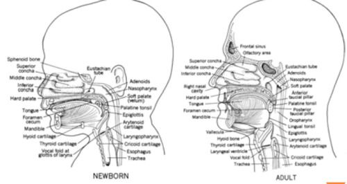 Dysphagia - Pediatric Anatomy and Physiology of Swallowing P1 ...