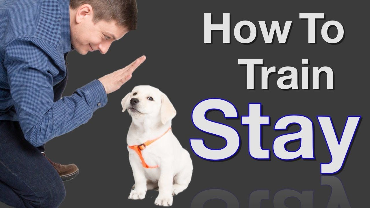 How to train your dog to stay this video is sponsored by