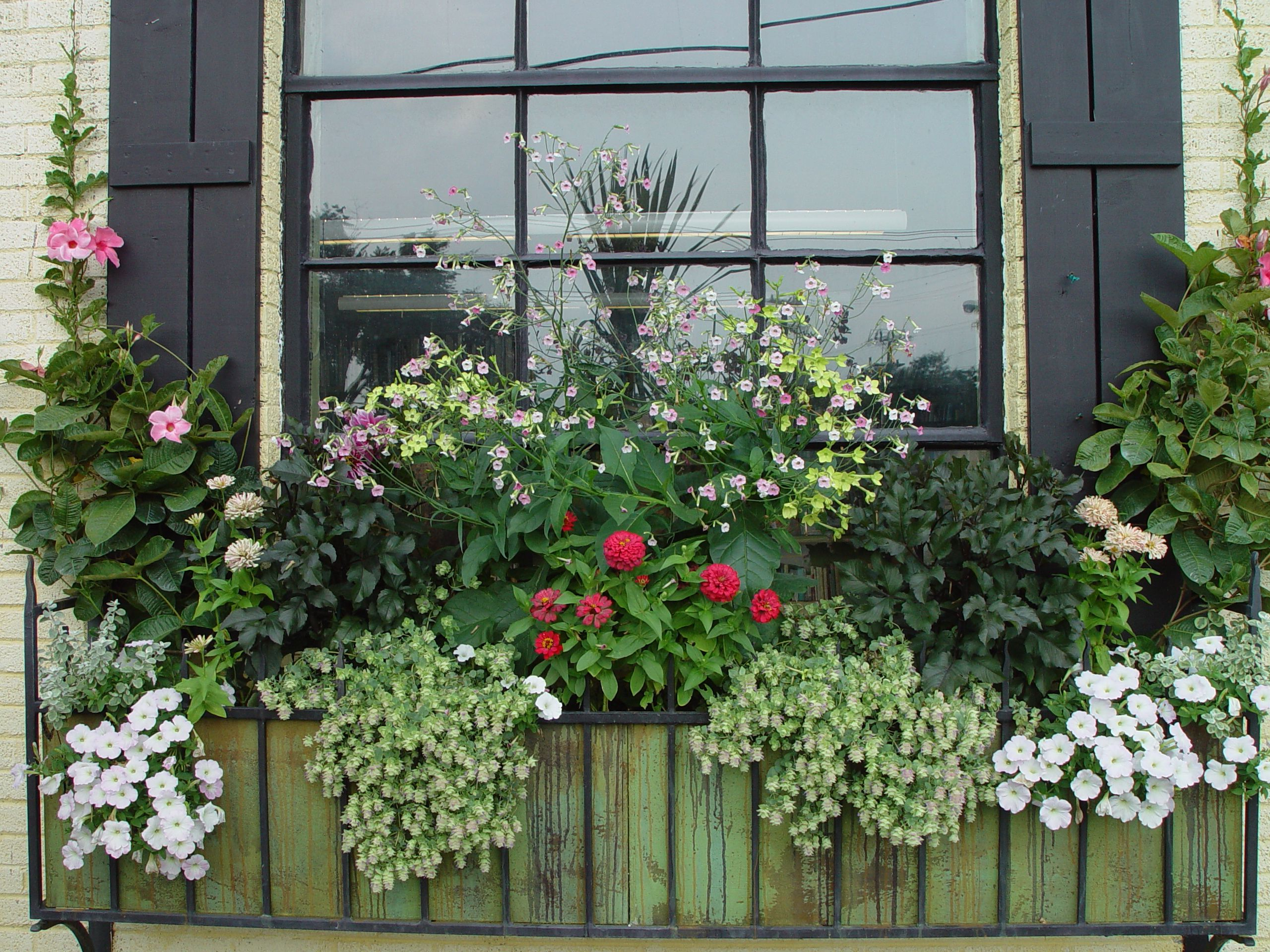 The Window Box | Dirt Simple. Container FlowersGarden ...