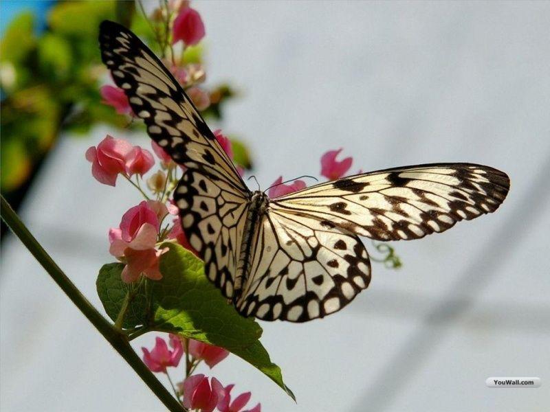 صورة فراشة Beautiful Butterflies Butterfly Butterfly Photos