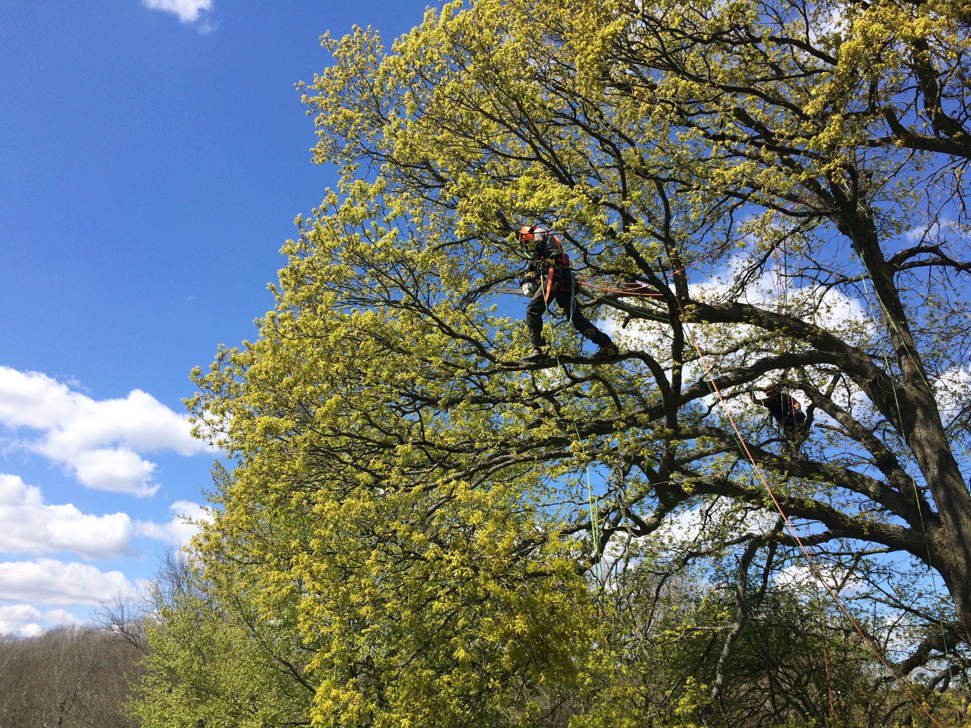 Pin by Scott Fraser Training Ltd on Climbing Arborist