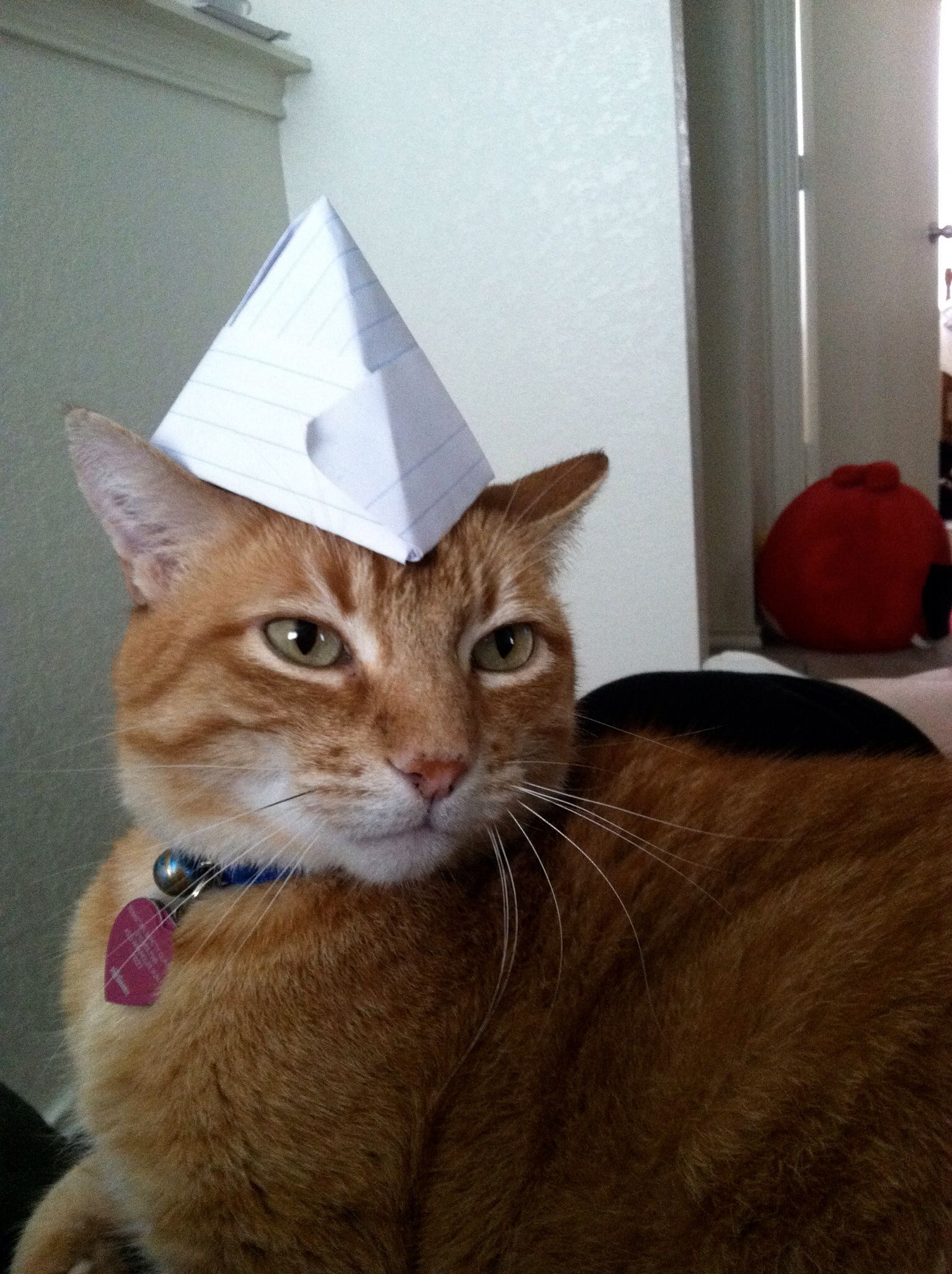 Nice Paper Hat Funnycats Cats With Hats Pet Costumes Cat Costumes