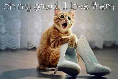 Feline shoe fetish