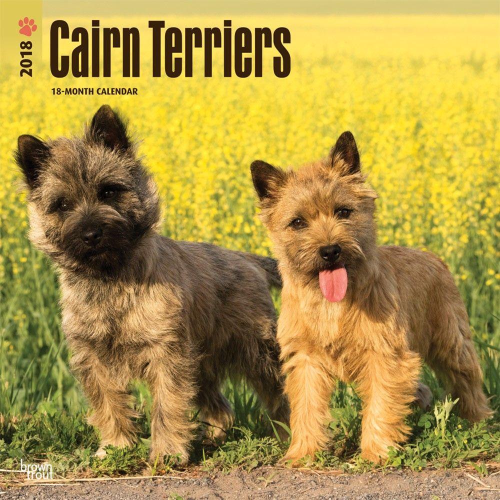 Cairn Terriers 2020 Wall Calendar Cairn Terrier Dog Breeds Terrier
