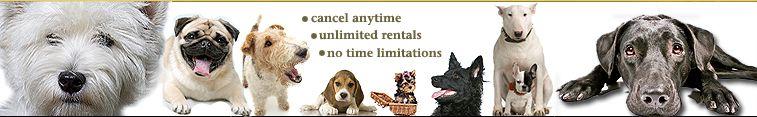 Bowwowflix Com How It Works Dvd Dvds Rental Rent Dog Training