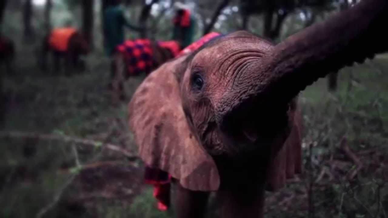 Elephant Adoption Film for the Holidays