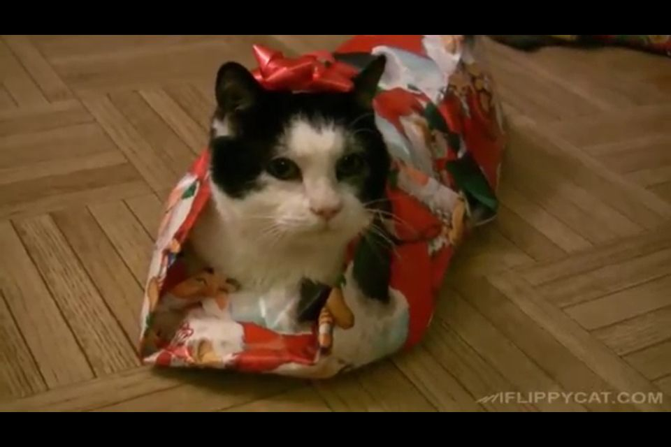 This cat seems surprisingly happy seeing as it has just been wrapped!!