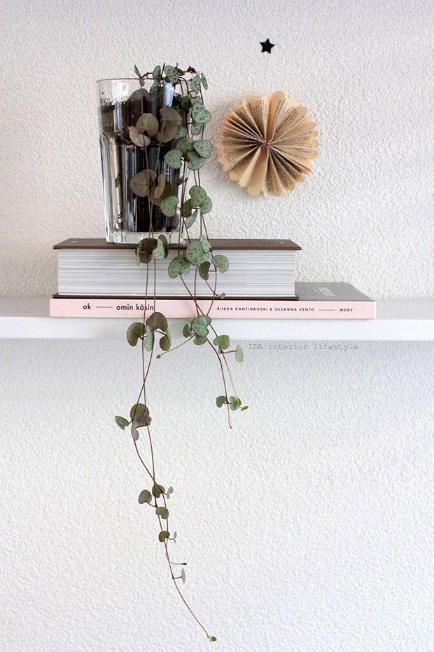 One plant, three stylings via Ida Interior Lifestyle