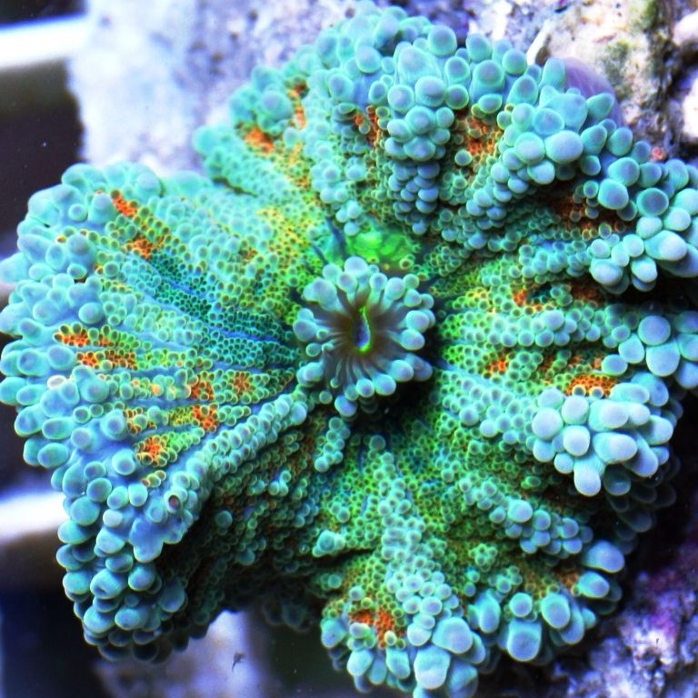 Hugedomains Com Citycoral Com Is For Sale City Coral Saltwater Aquarium Fish Coral Garden Saltwater Tank