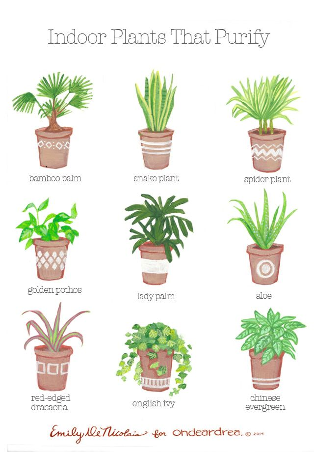 Simple natural living the best air purifying plants for for Good plants to have indoors