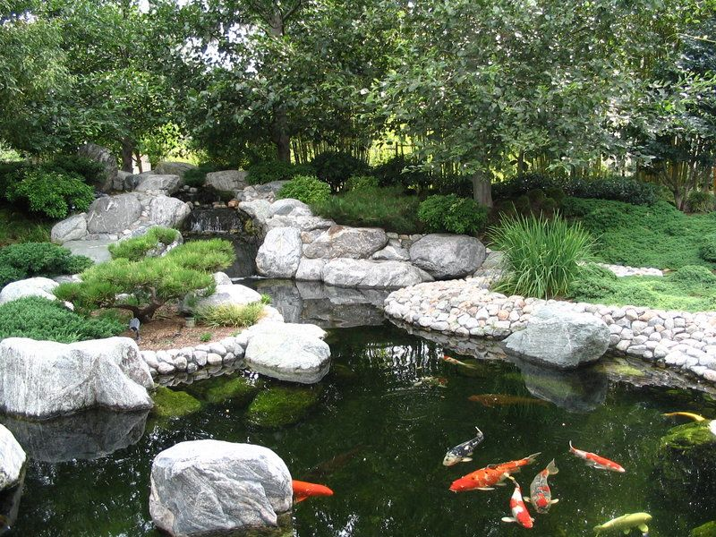 Pond gardens japanese garden koi pond by ryuaku on for Koi pond japan