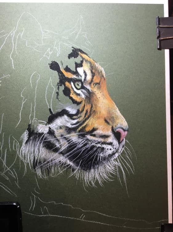 #Tigre (con imágenes) | Tigres animados, Cara de tigre, Tigre