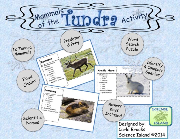 Mammals of the Tundra FREE Activity Tundra activities