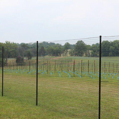 6 X 100 Standard Perimeter Deer Fence By Deerbusters
