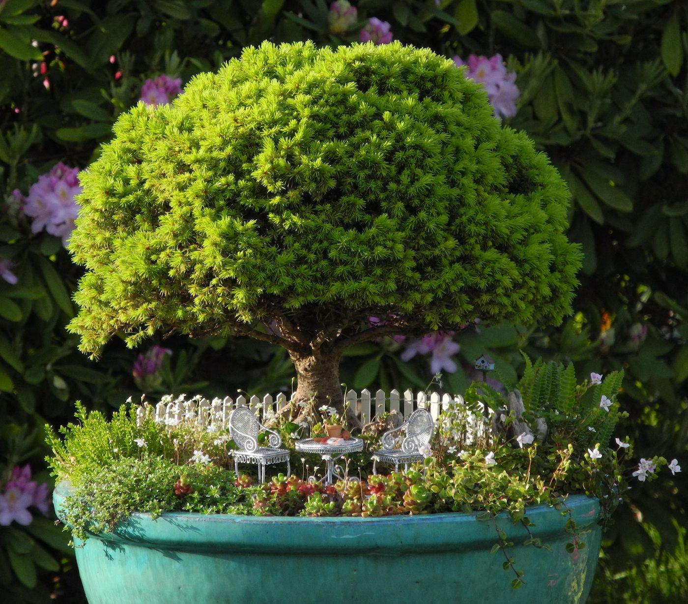 Medium Of Miniature Garden Trees