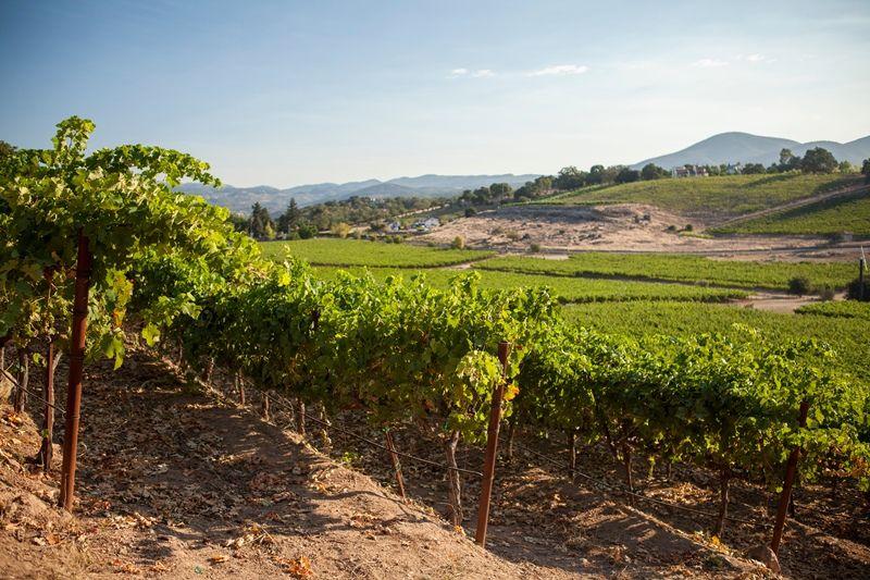 Merus vineyard Rutherford, Napa Valley Wine, Wine  Wine Pinterest