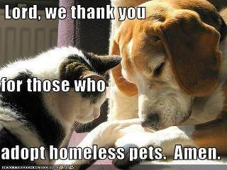 Lord We Thank You For Those Who Adopt Homeless Pets Amen Homeless Pets Pets Pet Adoption
