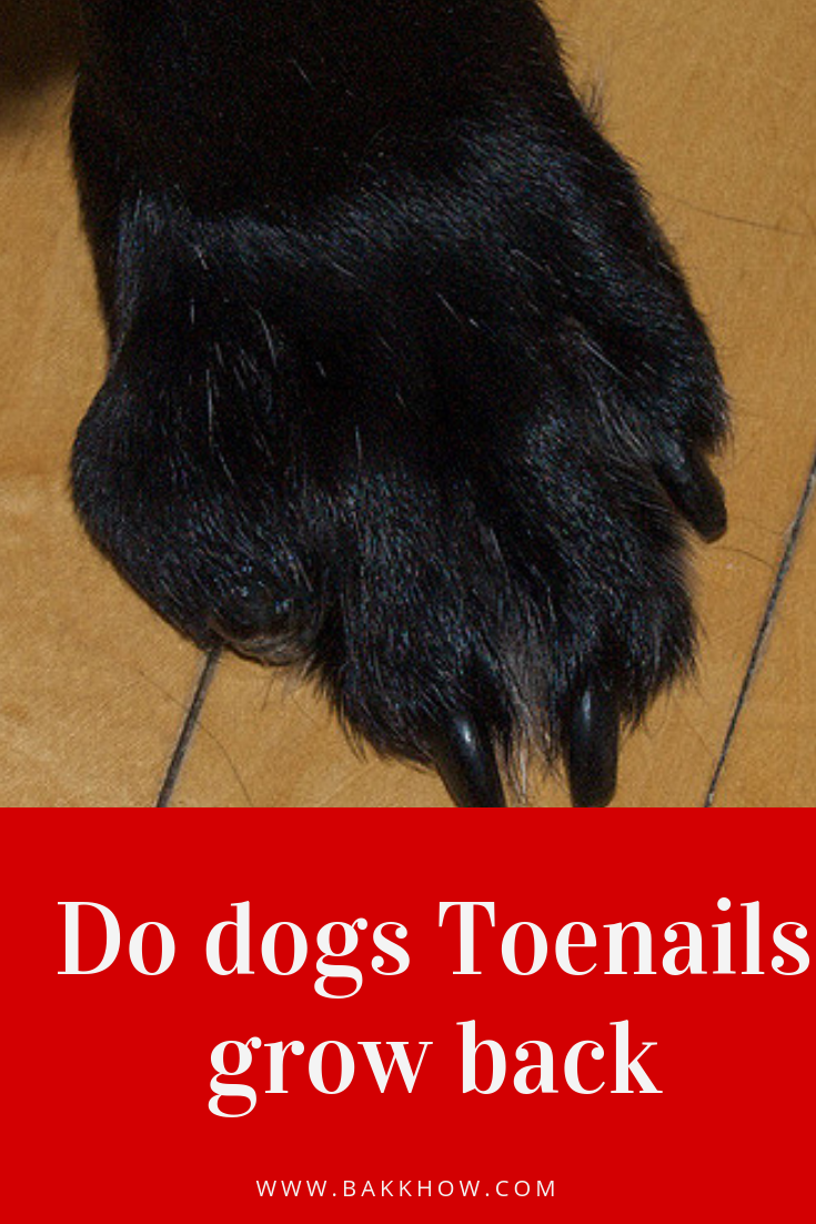 Do Dogs Toenails Grow Back If Broken Dog Toenails Toe Nails Dog Nails
